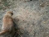моя собака боится кошку:D