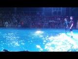 Дельфины и морской кит Пломбир - Харьковский Дельфинарий