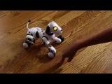 Интерактивный щенок Zoomer
